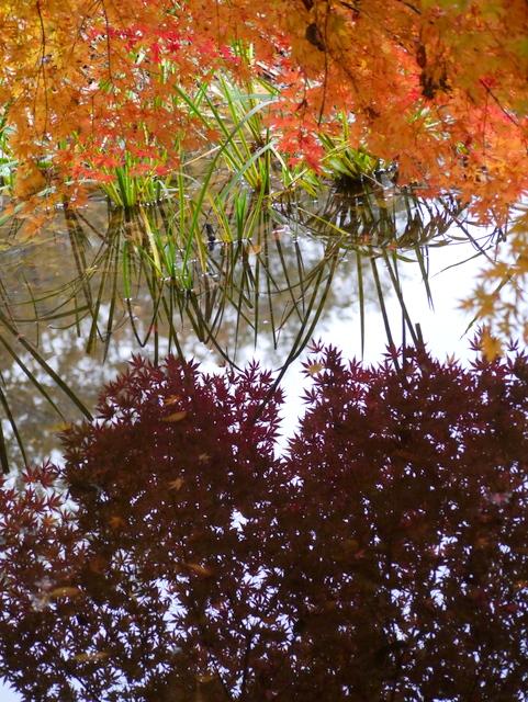 水に溶ける赤もみじ_f0147895_1995369.jpg