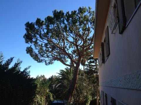 木の未来_a0255206_2454562.jpg