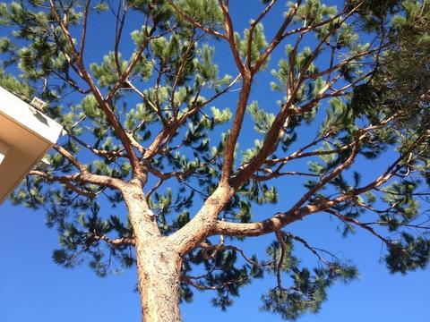 木の未来_a0255206_2493556.jpg