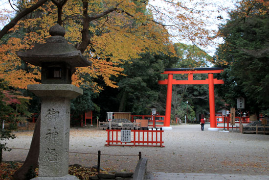 紅葉の終幕 下鴨神社 糺の森_e0048413_228060.jpg