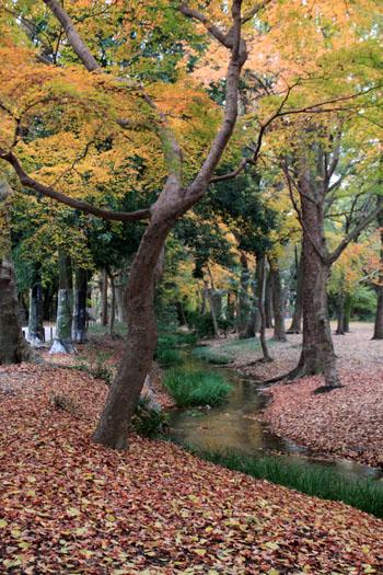 紅葉の終幕 下鴨神社 糺の森_e0048413_2281612.jpg