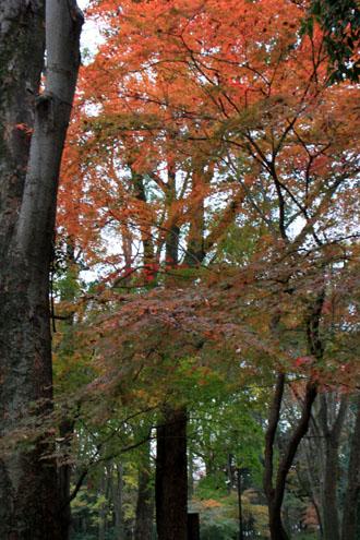 紅葉の終幕 下鴨神社 糺の森_e0048413_2282743.jpg
