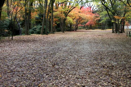 紅葉の終幕 下鴨神社 糺の森_e0048413_2285688.jpg