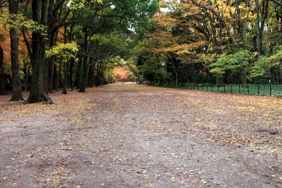 紅葉の終幕 下鴨神社 糺の森_e0048413_229112.jpg