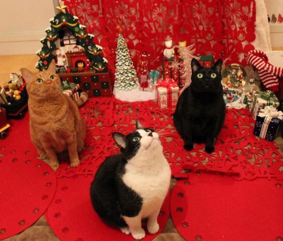 Yahoo!ペット「楽しいクリスマス!」コンテストエントリー猫 空ぽーしぇるのぇるろった編。_a0143140_21384821.jpg