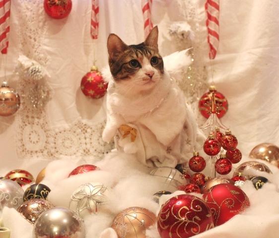 Yahoo!ペット「楽しいクリスマス!」コンテストエントリー猫 空ぽーしぇるのぇるろった編。_a0143140_228595.jpg