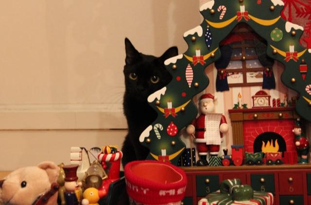 Yahoo!ペット「楽しいクリスマス!」コンテストエントリー猫 空ぽーしぇるのぇるろった編。_a0143140_228643.jpg