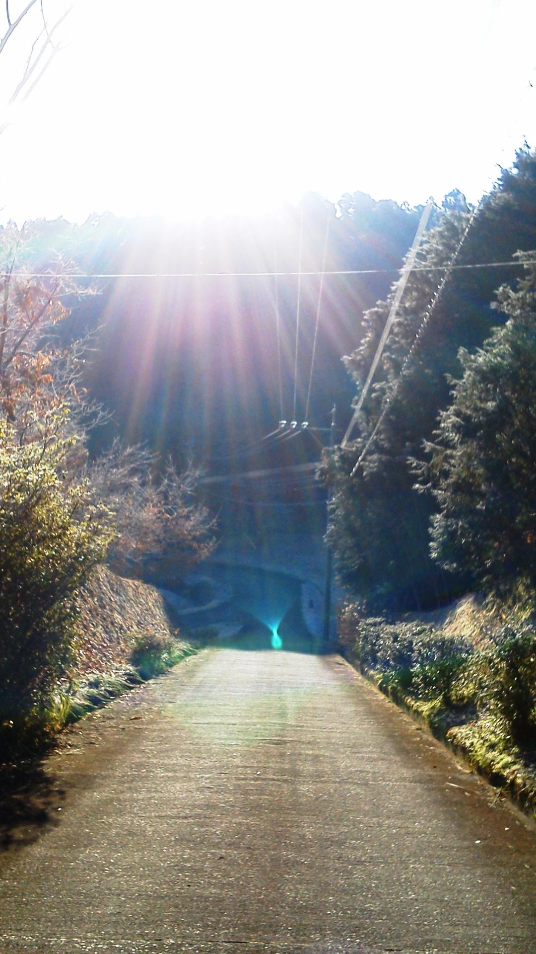 キラキラ☆光のシャワー_a0174458_1311363.jpg