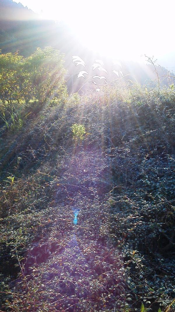 キラキラ☆光のシャワー_a0174458_164275.jpg