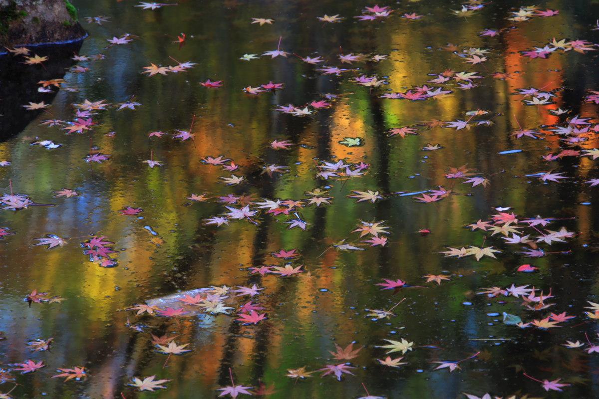 DIGIC 4 de 紅葉 2012 IN 万博公園_f0021869_2324278.jpg