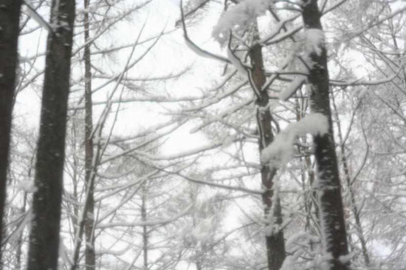 長野3(雪 その1)_d0133581_16365334.jpg