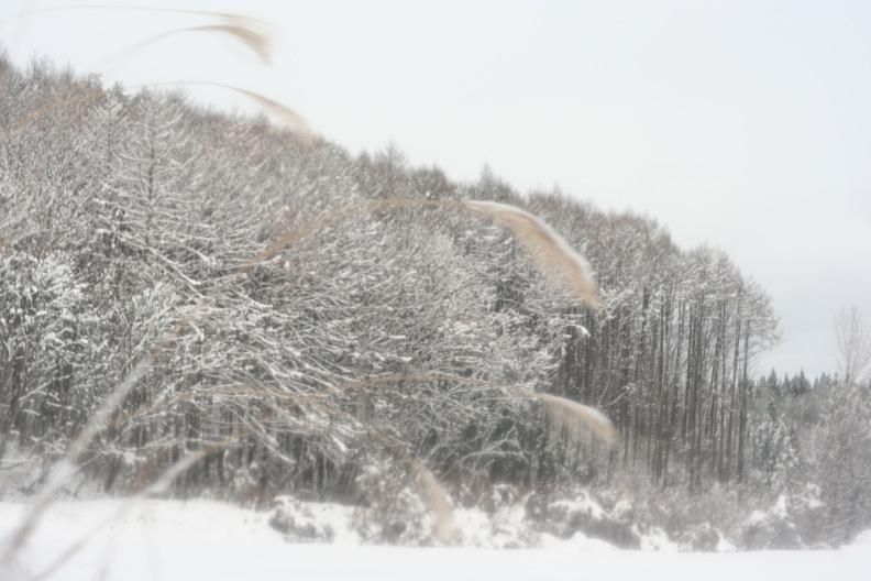 長野3(雪 その1)_d0133581_16365982.jpg