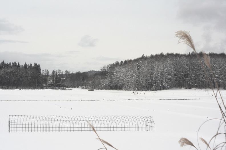 長野3(雪 その1)_d0133581_16371040.jpg