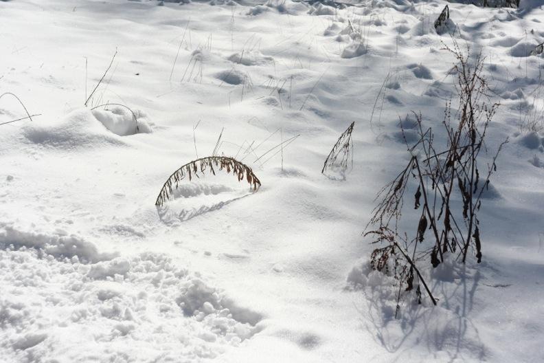 長野3(雪 その2)_d0133581_1642443.jpg