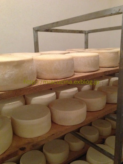 カステッルッチョで羊のチーズ作り見学_b0107003_11483883.jpg
