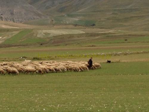 カステッルッチョで羊のチーズ作り見学_b0107003_11521529.jpg