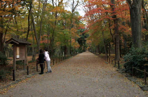 河合神社と糺の森_e0048413_1974243.jpg