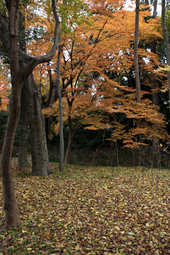 河合神社と糺の森_e0048413_1975288.jpg