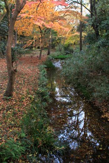 河合神社と糺の森_e0048413_1981690.jpg
