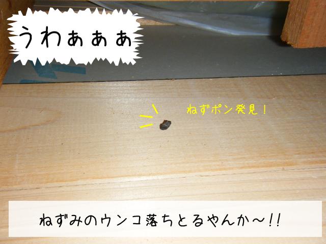 f0008935_13123066.jpg