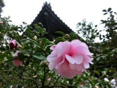 鎌倉七福神ウォーク_f0019247_20411879.jpg