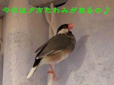 b0158061_2101845.jpg