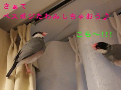 b0158061_2103284.jpg
