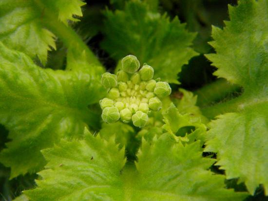 オキザリス桃の輝き、ミャンハウス、庭の様子など_a0136293_9475336.jpg