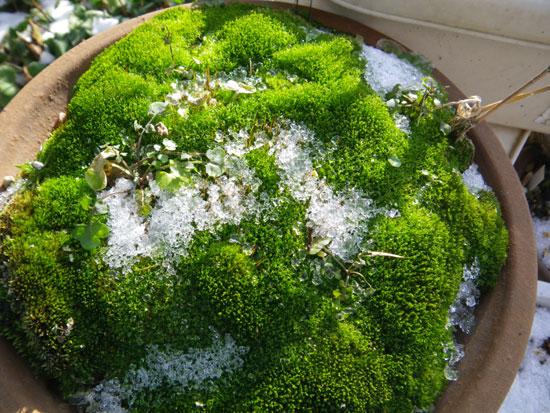 オキザリス桃の輝き、ミャンハウス、庭の様子など_a0136293_950468.jpg