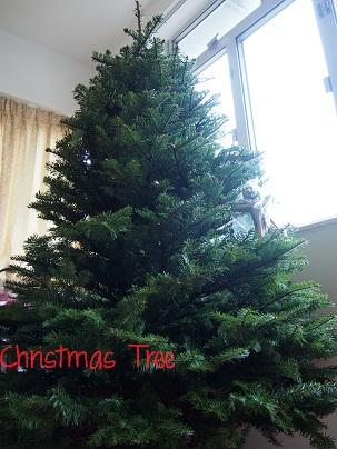 Christmas Tree 2012_d0088196_11135197.jpg