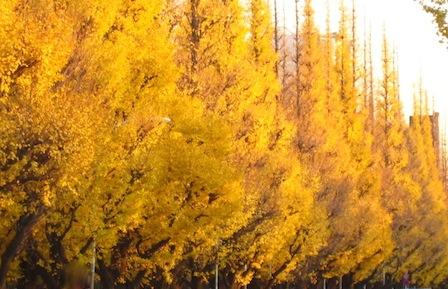 Yellow Magic_d0154102_0384478.jpg