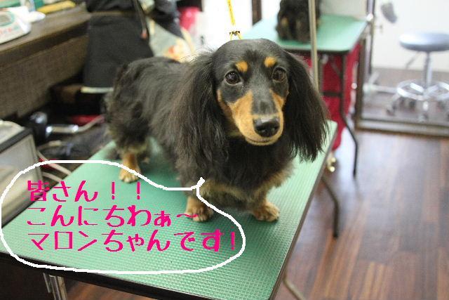 幸せぇ~~!!_b0130018_0265629.jpg