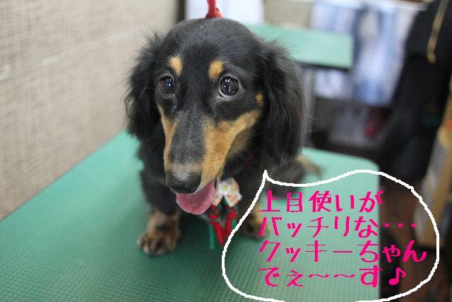 幸せぇ~~!!_b0130018_0272489.jpg