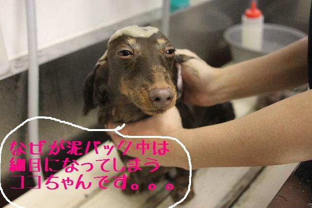 幸せぇ~~!!_b0130018_0284662.jpg
