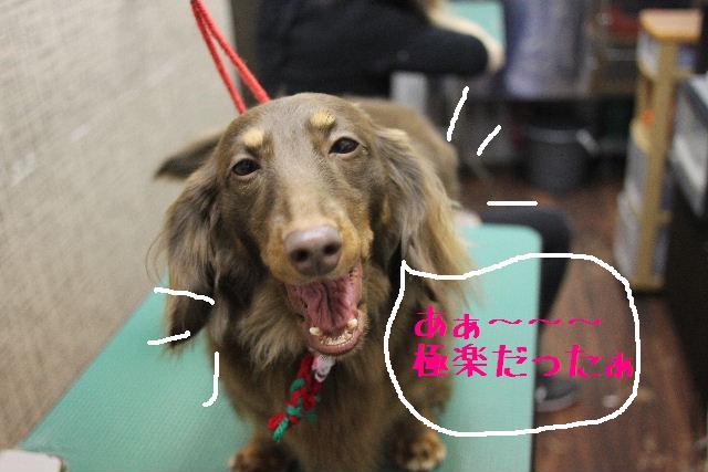 幸せぇ~~!!_b0130018_0292229.jpg