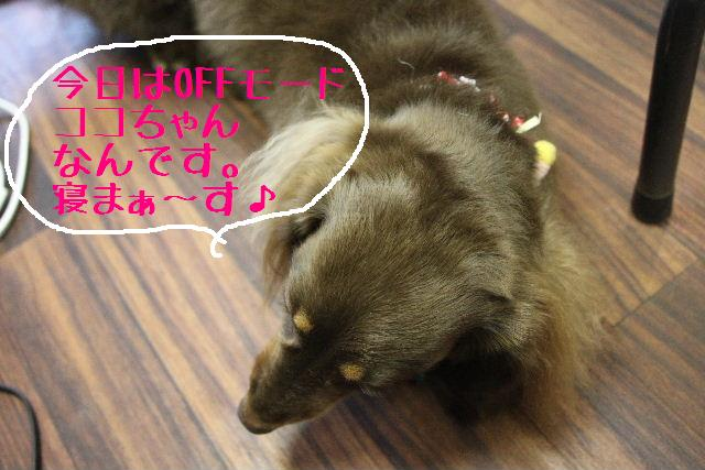 幸せぇ~~!!_b0130018_0293652.jpg