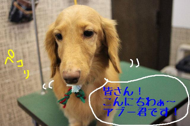 幸せぇ~~!!_b0130018_031762.jpg
