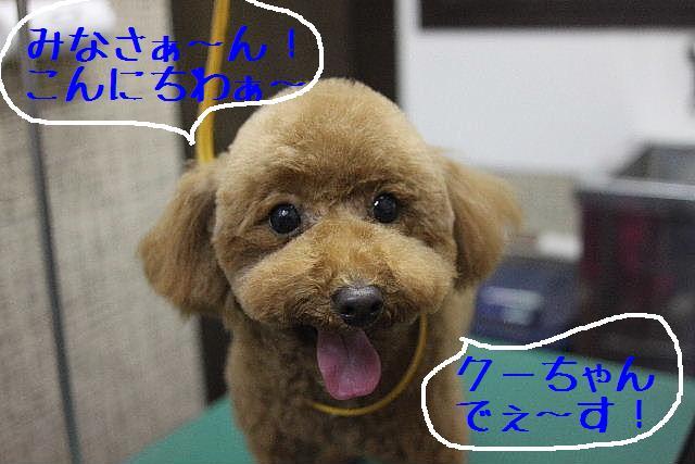 幸せぇ~~!!_b0130018_0324593.jpg