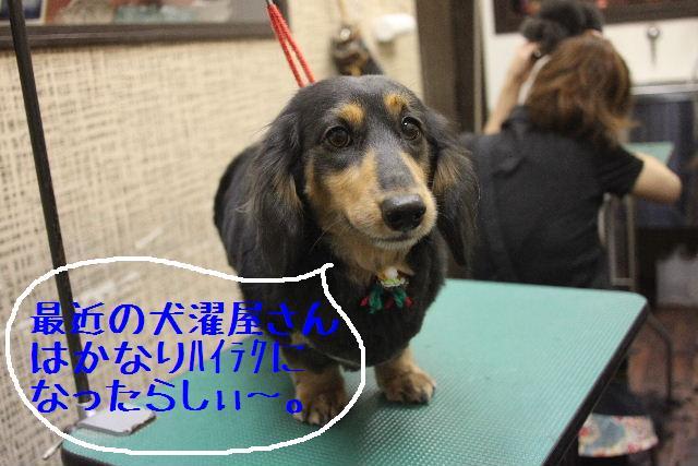 幸せぇ~~!!_b0130018_0343683.jpg