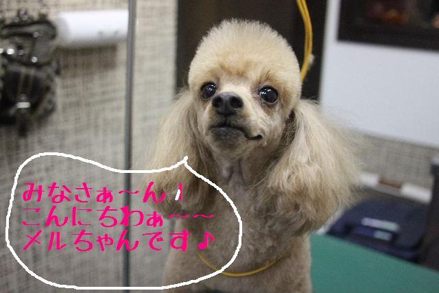 幸せぇ~~!!_b0130018_0363341.jpg