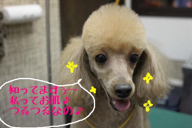 幸せぇ~~!!_b0130018_0364025.jpg