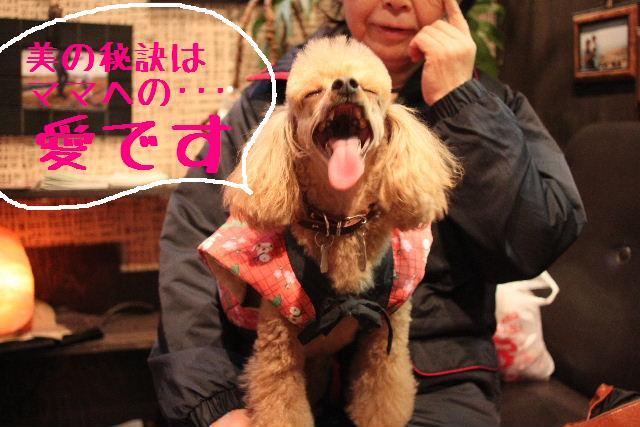幸せぇ~~!!_b0130018_0364878.jpg