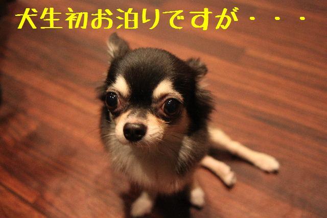 b0130018_23223150.jpg