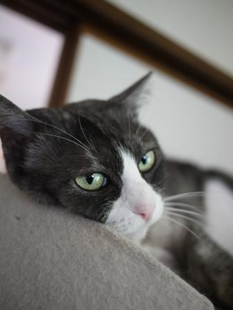 猫のお友だち マイちゃん編。_a0143140_2145738.jpg