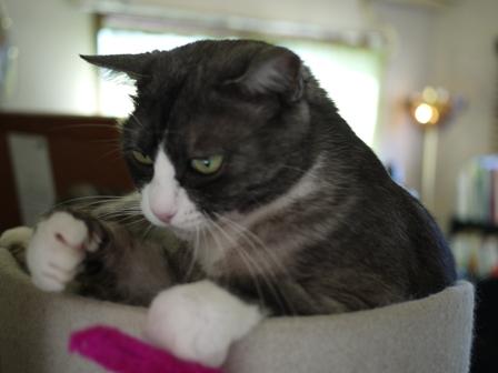 猫のお友だち マイちゃん編。_a0143140_21542175.jpg