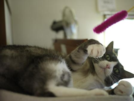 猫のお友だち マイちゃん編。_a0143140_21544926.jpg