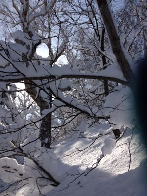 北海道7日目 ☆ 札幌国際スキー場_c0151965_14151620.jpg