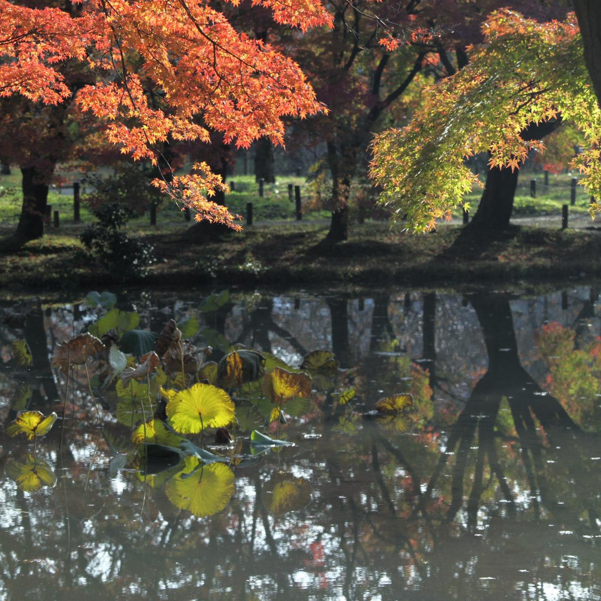 紅葉 2012  京都府立植物園_f0021869_22412346.jpg