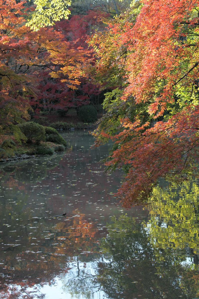 紅葉 2012  京都府立植物園_f0021869_22435026.jpg