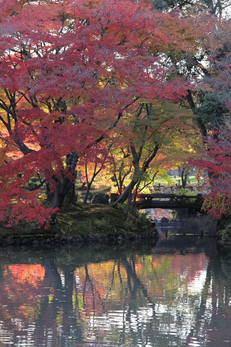 紅葉 2012  京都府立植物園_f0021869_22452954.jpg